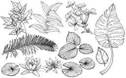 Ramas, flores y hojas determinadas, elementos exhaustos de la planta del diseño de la mano para las tarjetas de felicitación para stock de ilustración