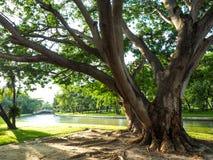 Ramas grandes de árboles con las hojas en la hierba verde en el rive Fotos de archivo