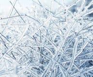 Ramas heladas Imagen de archivo