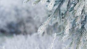 Ramas heladas del abeto el día de invierno almacen de metraje de vídeo