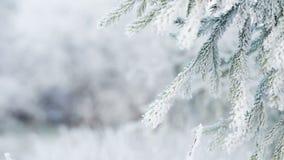 Ramas heladas del abeto el día de invierno almacen de video