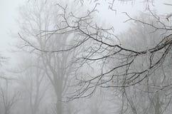 Ramas heladas en niebla Fotos de archivo libres de regalías