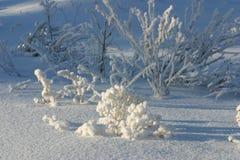 Ramas heladas en un día de invierno soleado imágenes de archivo libres de regalías