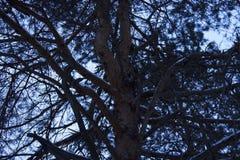 Ramas hermosas del árbol Imagen de archivo