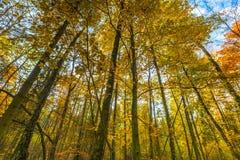 Ramas hermosas del bosque de la caída vistas de parte inferior Imagenes de archivo