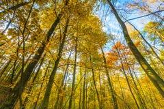 Ramas hermosas del bosque de la caída vistas de parte inferior Fotos de archivo