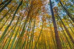 Ramas hermosas del bosque de la caída vistas de parte inferior Fotos de archivo libres de regalías