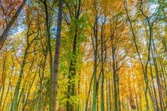 Ramas hermosas del bosque de la caída vistas de parte inferior Imagen de archivo libre de regalías