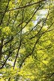 Ramas, hojas, sol, y sombra Fotos de archivo