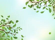 Ramas, hojas y cielo Foto de archivo