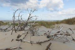 Ramas muertas en las dunas foto de archivo