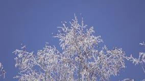 Ramas nevadas de debajo metrajes