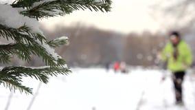 Ramas nevadas de la picea y figura esquiador-patinadora metrajes