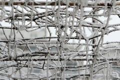 Ramas Nevado Fotos de archivo libres de regalías