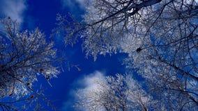 Ramas Nevado debajo de un cielo azul hermoso foto de archivo libre de regalías