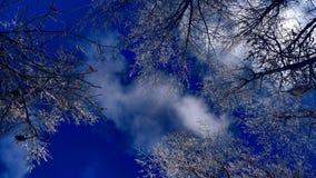 Ramas Nevado debajo de un cielo azul hermoso fotografía de archivo