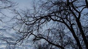 Ramas oscuras de árboles contra el contexto de un cielo brillante y de las nubes, contraste metrajes