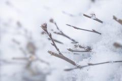 Ramas que alcanzan de cristalls de la nieve Imagenes de archivo