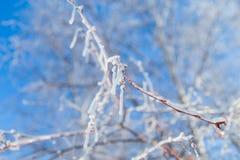 Ramas rojas congeladas Foto de archivo libre de regalías