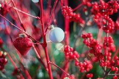 Ramas rojas decorativas con las bayas rojas adornadas con Christma Fotos de archivo libres de regalías