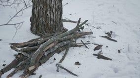 Ramas secas de un árbol en el bosque del invierno almacen de metraje de vídeo