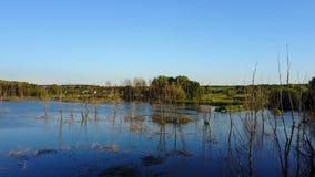 Ramas secas en el lago almacen de video