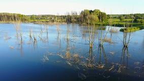Ramas secas en el lago almacen de metraje de vídeo