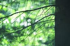 Ramas soleadas borrosas artísticas del árbol forestal foto de archivo libre de regalías