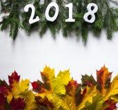 Ramas Spruce con los cuadros 2018 y hojas caidas del amarillo del arce imagen de archivo