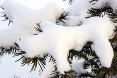 Ramas Spruce debajo de la nieve Foto de archivo libre de regalías