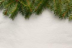 Ramas Spruce en el fondo blanco, textura de la nieve Fotos de archivo