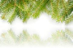 Ramas Spruce en el fondo blanco, textura de la nieve libre illustration