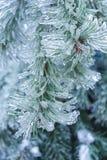 Ramas Spruce en el hielo Fotos de archivo