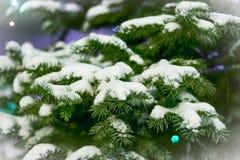 Ramas Spruce en la nieve tarjeta Fotografía de archivo