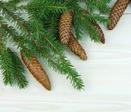 Ramas spruce frescas con los conos por el Año Nuevo Imagenes de archivo