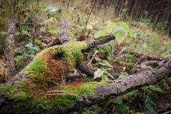 Ramas verdes Foto de archivo