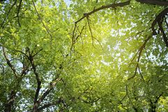 Ramas verdes fotografía de archivo libre de regalías