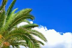 Ramas verdes de la palma Imágenes de archivo libres de regalías