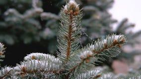 Ramas verdes de la picea, abeto debajo de la nieve Árbol imperecedero La primera nieve, otoño, primavera, invierno temprano Cámar almacen de video