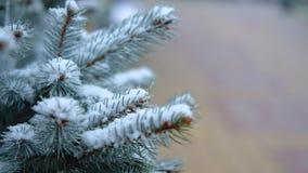 Ramas verdes de la picea, abeto debajo de la nieve Árbol imperecedero La primera nieve, otoño, primavera, invierno temprano Cámar almacen de metraje de vídeo