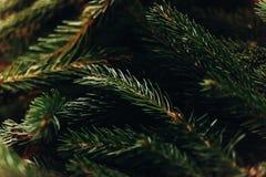 Ramas verdes del abeto adornamiento del árbol de navidad en sitio preparación casera Fotografía de archivo libre de regalías