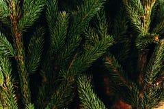 Ramas verdes del abeto adornamiento del árbol de navidad en sitio preparación casera Foto de archivo libre de regalías