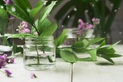 Ramas verdes en un tarro de cristal con las gotitas alrededor de las hojas Foto de archivo libre de regalías