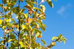 Ramas verticales verdes en un cielo Foto de archivo