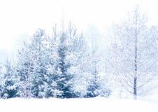 Ramas y árboles de navidad de árbol Nevado Imagenes de archivo