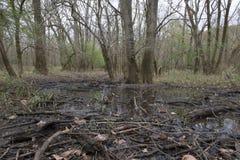 Ramas y árboles dispersados del humedal Imagen de archivo libre de regalías