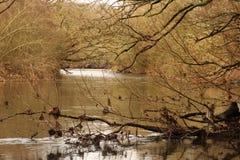 Ramas y agua Imagen de archivo libre de regalías