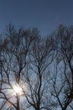 ramas y bayas de árboles en ellos en el otoño noviembre Imagen de archivo