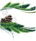 Ramas y conos del pino Fotos de archivo