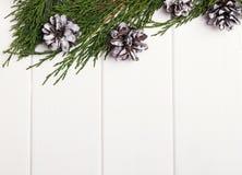 Ramas y conos del pino Todavía de la Navidad vida Fotografía de archivo